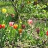 Garten Frühling 2010