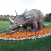 Kuerbisausstellung 2011