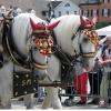pferdemarkt_ludwigsburg_2012_-24