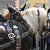 pferdemarkt_ludwigsburg_2012_-41