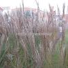 rheinlandstrasse_nov2011_7